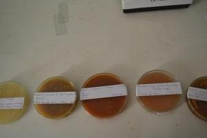 Biologia - 3ª série EM (7)