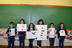 Estudo das Plantas (38)